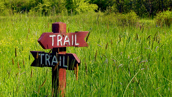 Trail sign in a clearing.